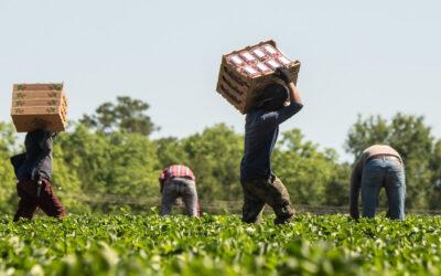 Nearly Half a Million California Farmworkers Could Gain Legal Status Under New Bill