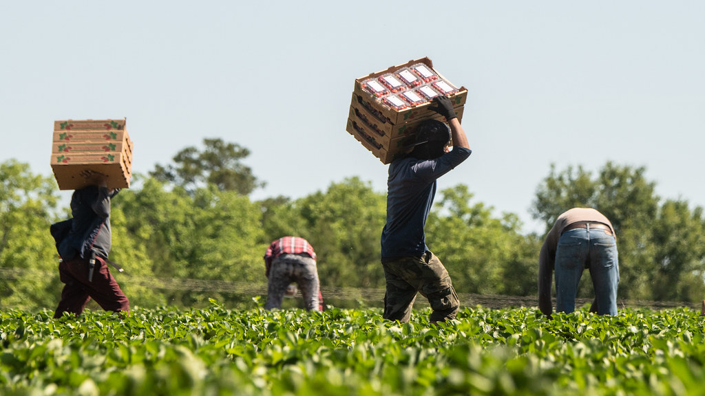 House vote opens path to legal status for immigrant farmworkers