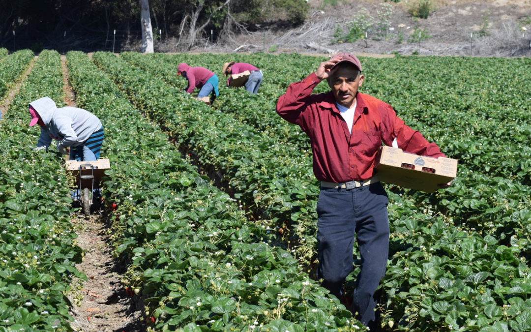 Lawmakers strike deal for undocumented immigrant farmworkers