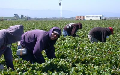 Legalize America's essential immigrant farmworkers